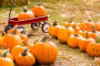 10 Pumpkin Patches Around Charlotte